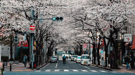 Studies in Tokyo